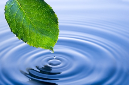 Leaf and water stock image